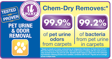 Chem-Dry of North County removes 99.9% of pet odors from carpets and upholstery